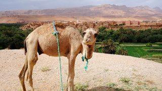 モロッコを観光する前に知っておきたい!『へー!』な雑学10選*