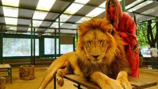 ルハン動物園「世界一危険な動物園」ってどんなとこ?事故は起こらないの?