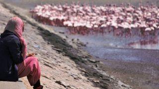 やっと見れたピンクフラミンゴ!&盛り上がる恋愛話。