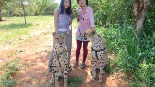 ○○を持って、ライオンとお散歩! inザンビア